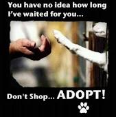 Adopt! Don't shop