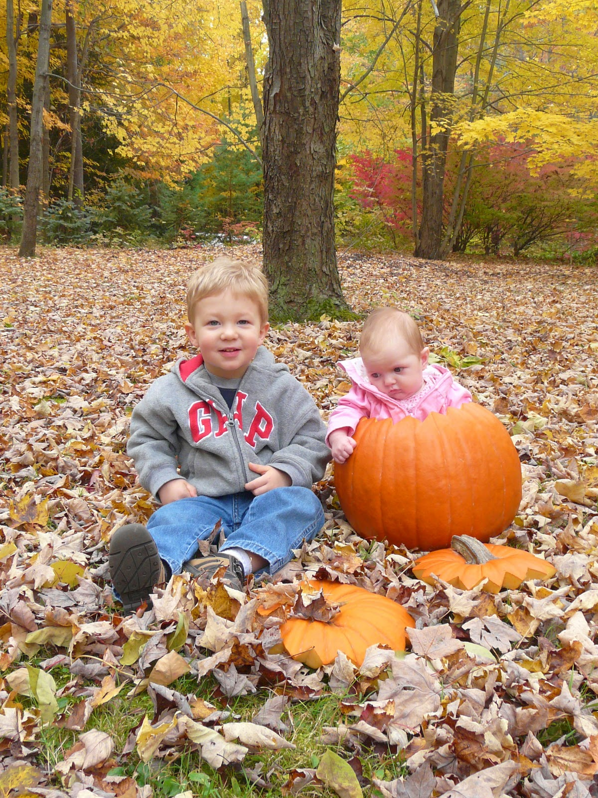 Fall Photo Shoot Ideas For Kids Kids in pumpkins   fall photoFall Photo Shoot Ideas For Babies
