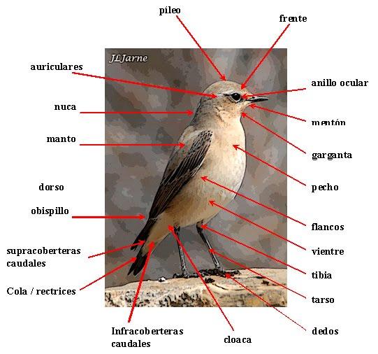 BIOLOGÍA Y GEOLOGÍA 1º ESO: AVES: morfología externa