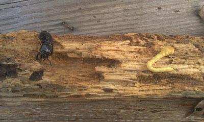 Dead Wood - Slow Threat