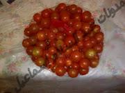 الطماطم الشيرى