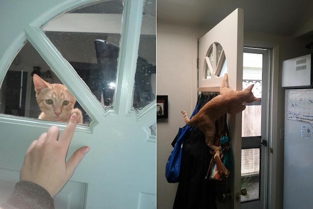 funny cat pictures, cat climbs door