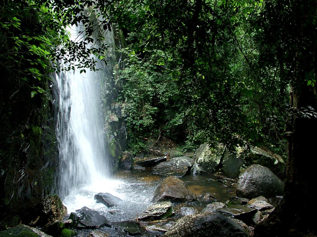 http://2.bp.blogspot.com/-uU7B5bGStKA/TsLVKeXHstI/AAAAAAAACuM/znwX7aA4atk/s1600/backgrounds-high-resolution-1024x768-wallpaper-hd-jungle-waterfall.jpg