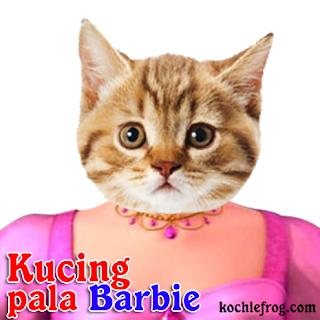 kucing pusing pala barbie