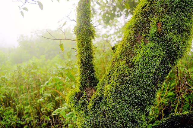Tree stem