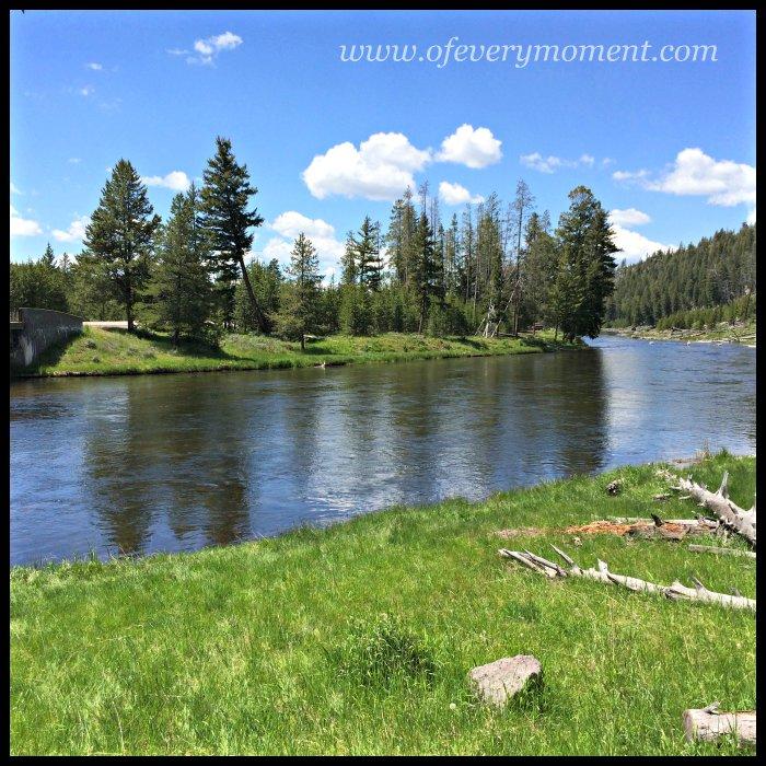 wading, Yellowstone