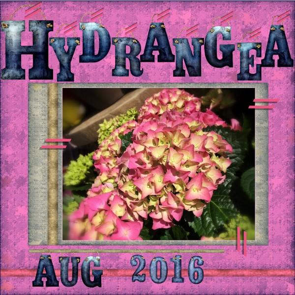 Aug-2016-H = Hydrangea