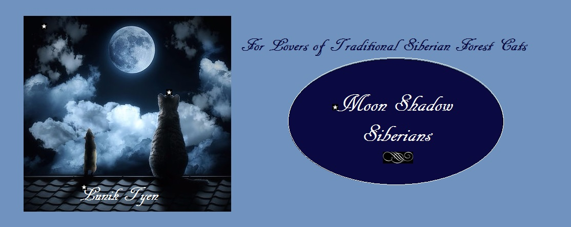 Anzhelika Moonshadow Siberians