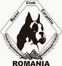 Boxer Club Carpatia