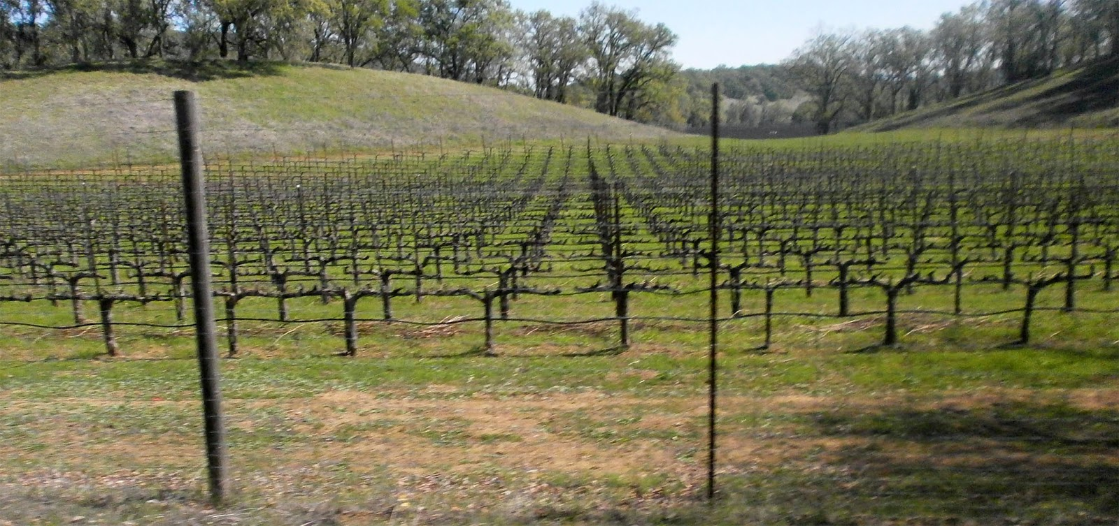 pope valley 1of 5hine ranch in pope valley recently produced its inaugural 2015 cabernet  sauvignonphoto: noah berger, special to the chronicle.