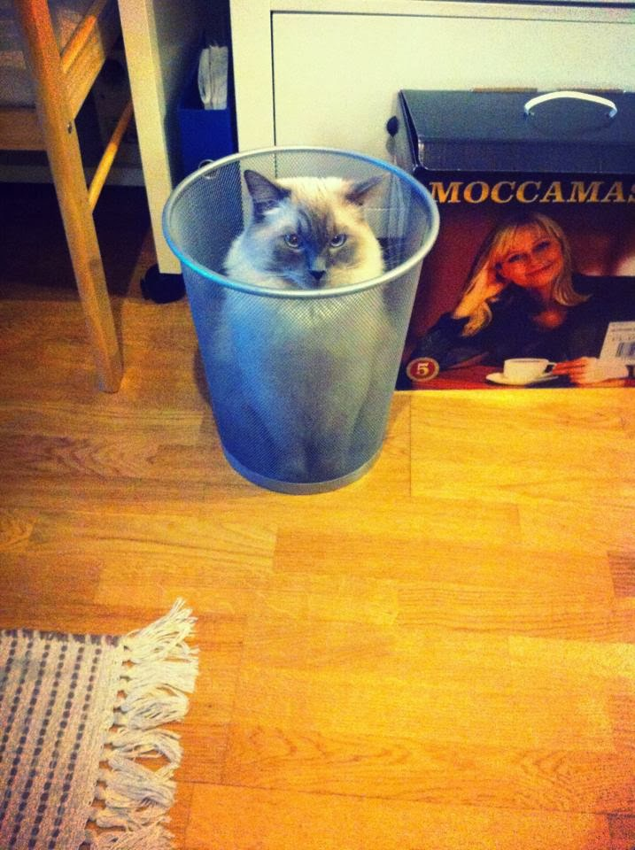 Funny cats - part 87 (40 pics + 10 gifs), cat sits in garbage bin
