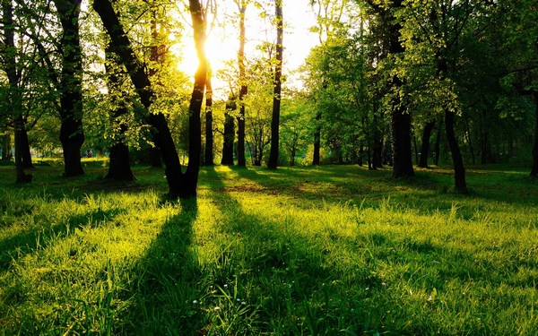 Beautiful Sun Rays in Green Forest HD Images