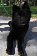 Rosa, the black dog of Black Dog Jewelry