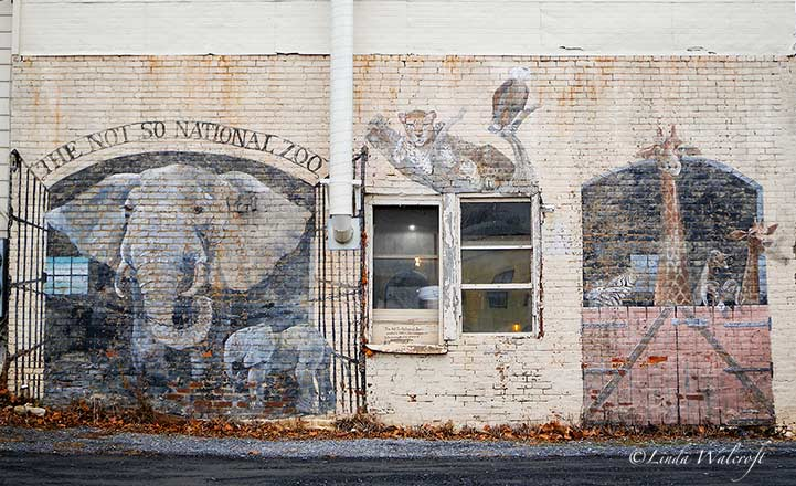 wall mural with elephant