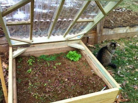 A Cold Frame of Your Own