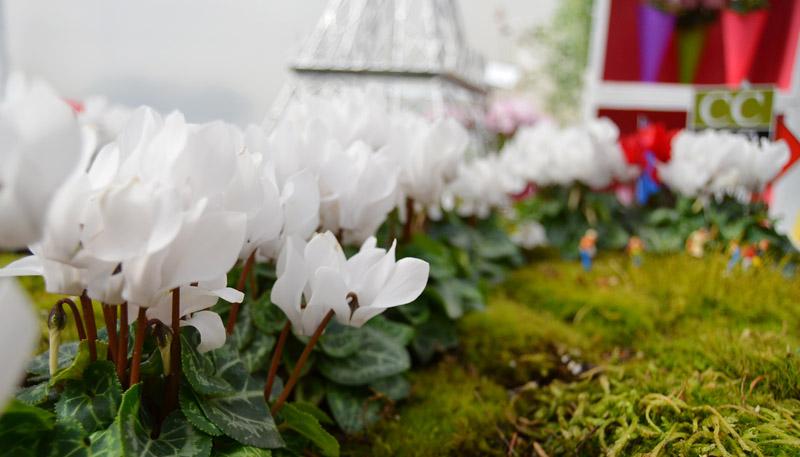 White Cyclamen, Smartiz Series, Morel, Photo by Amy Renea of A Nest for All Seasons