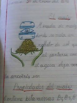 MIRADA DE MAÍZ