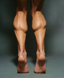 Pantorrilla, Musculo, Crecimiento, Crecimiento Muscular, Entrenamiento, Fuerza, Dieta, Dieta Simple