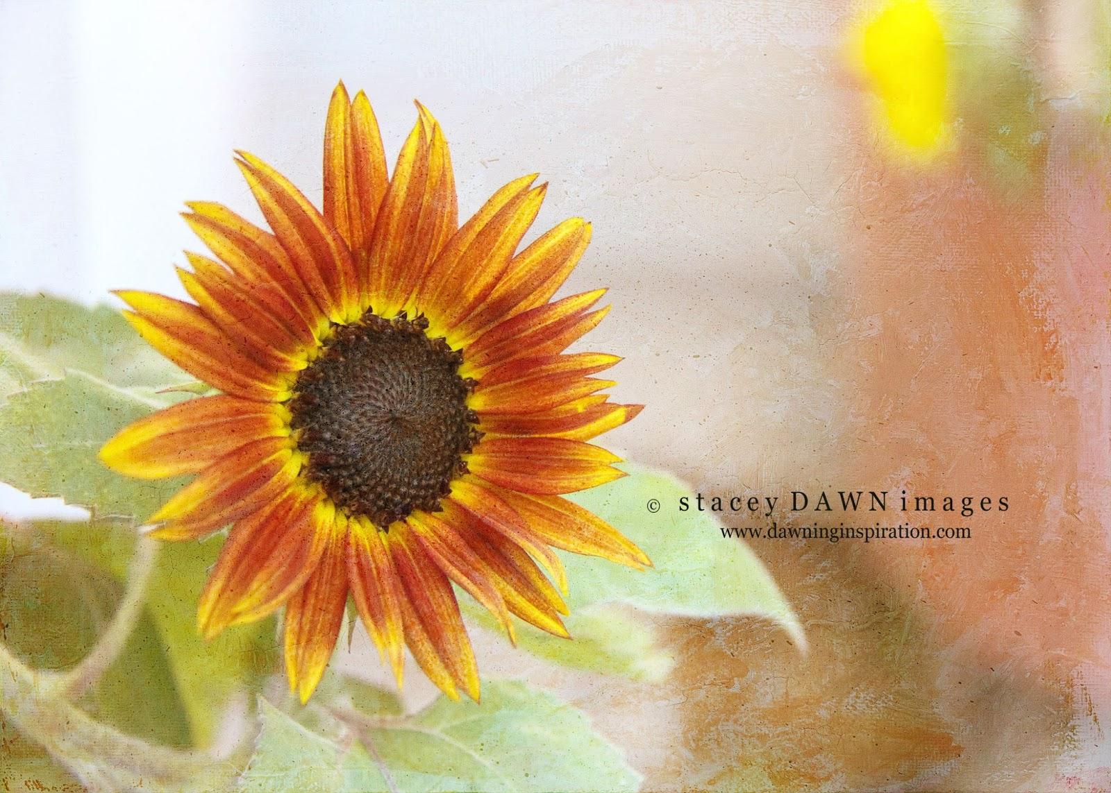 copyright Dawning Inspiration.com