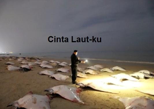 ikan pari Manta birostris