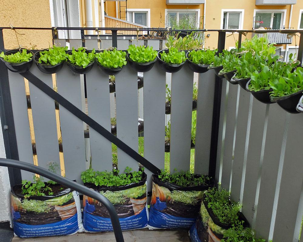 odla på balkong