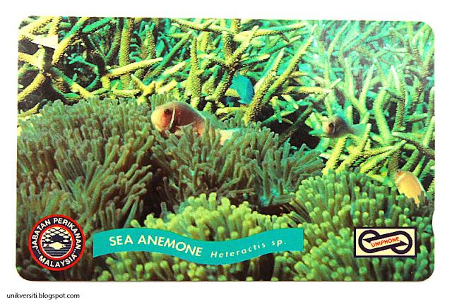 kad uniphone - Sea anemone , Jabatan Perikanan Malaysia