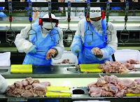 Carne Osso - Documentário sobre a exploração humana nos matadouros estreia na TV