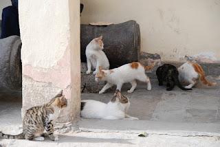 Cat infestation