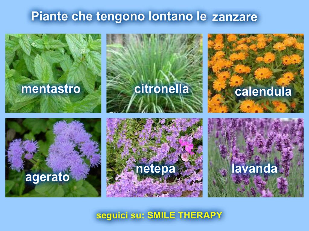 Piante contro le zanzare in modo naturale - Contro le zanzare in giardino ...