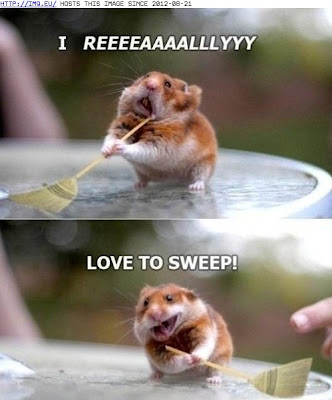 Funny animal captions animal capshunz swept me off my feet