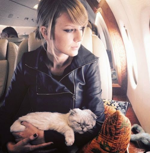 Cat Travel deluxe: exaggerates's Taylor Swift? For their animals only the best