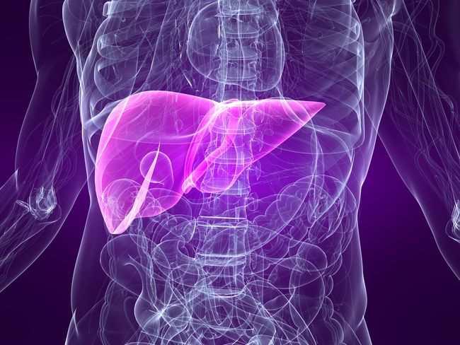 Jamu Herbal Hepatitis B Terbaik Dan Terampuh