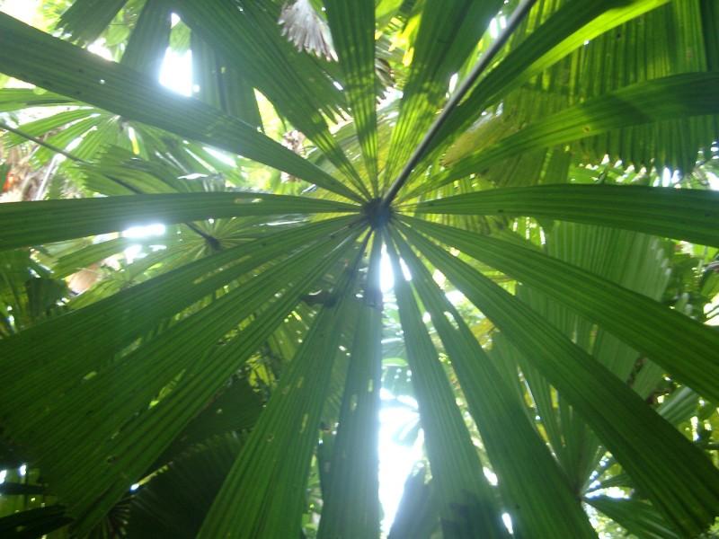 Pray for the peace of jerusalem 4 22 14 prayer for Prayer palm plant