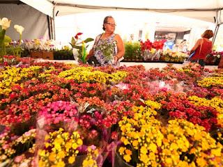 Maceió sedia Festival das Flores de Holambra a partir desta quinta (24)