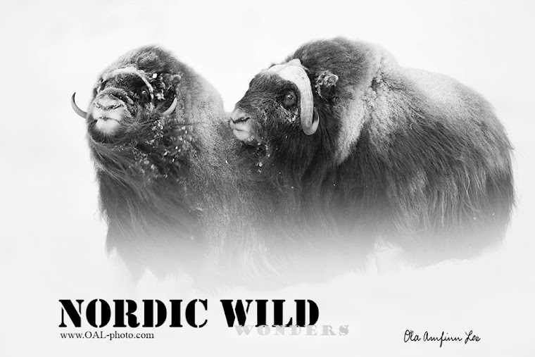 Nordic Wild