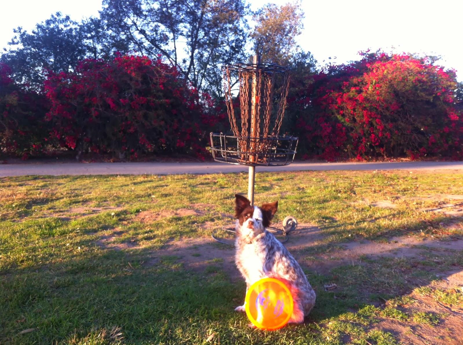 Frisbee Golf Course Huntington Beach