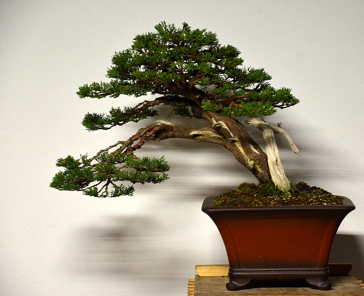 Bonsai Living Art June 2012