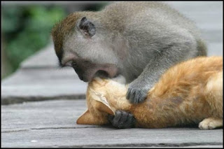 Monkey Vs Cat Images