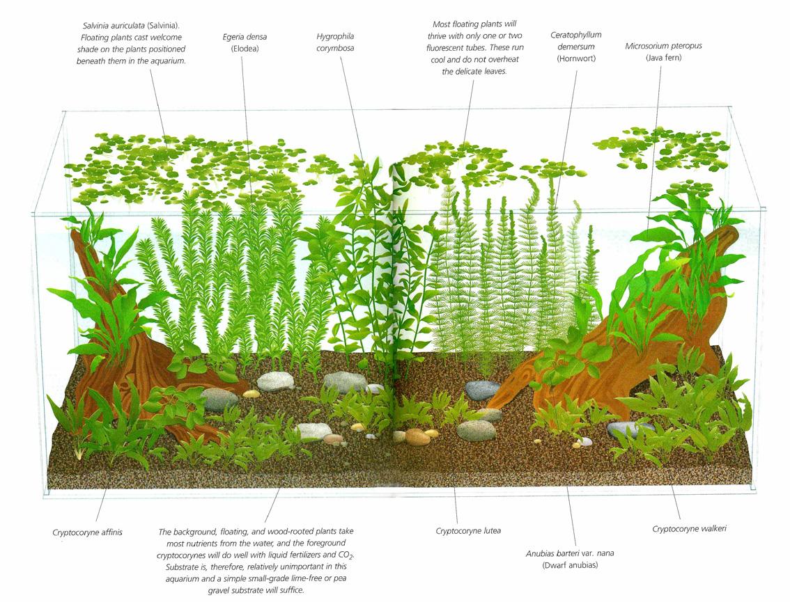 Acuario de baja iluminacion - Iluminacion para plantas ...
