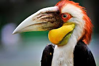Burung Julang Emas Kian Terancam Punah