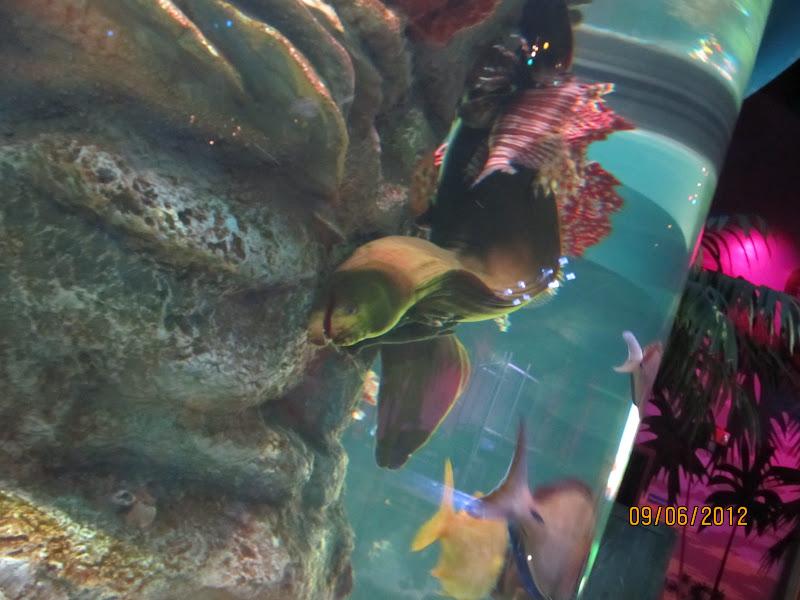 Kellen And Ethan 39 S Blog Sea Life Minnesota Aquarium