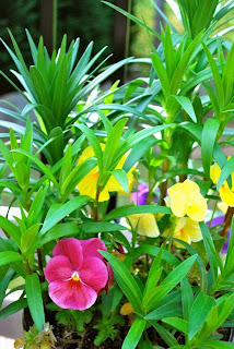 pansy, pansies, lily, lilies