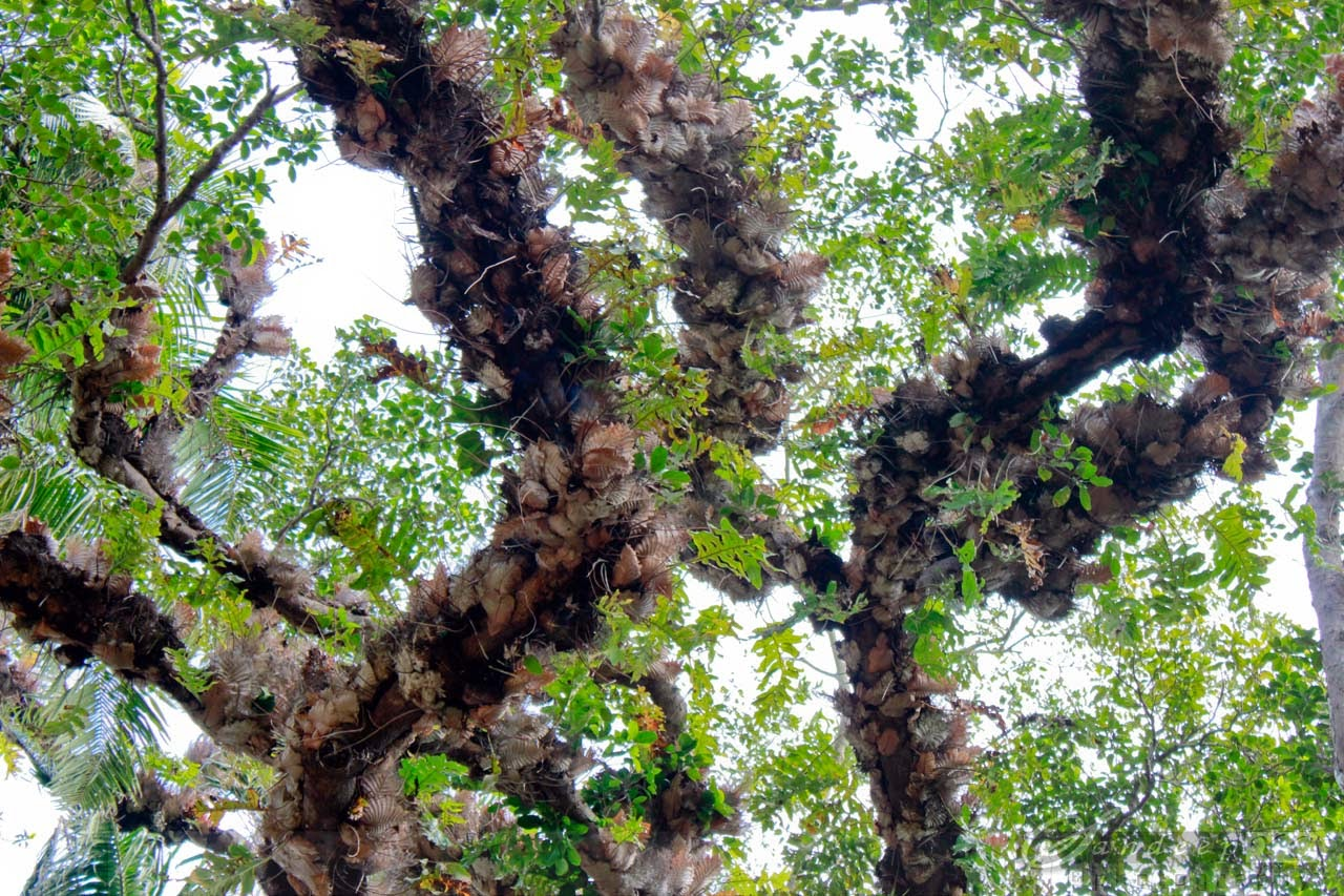 Strange trees found at the Island