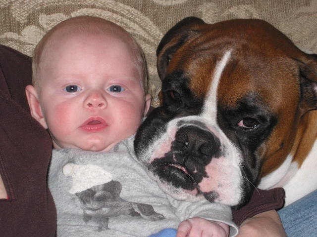 Pin Fancy Fawn Boxer Dogs on Pinterest