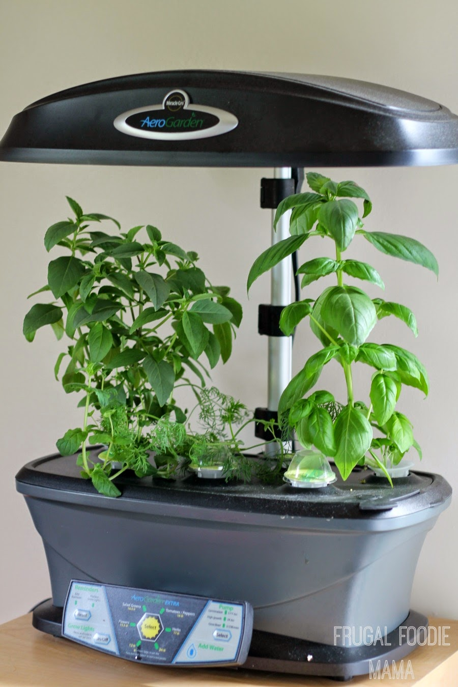 Frugal Foodie Mama Why You Need An AeroGarden The Winner of