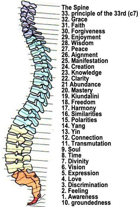 Atractivo Diagrama De Esqueleto Columna Vertebral Ilustración ...