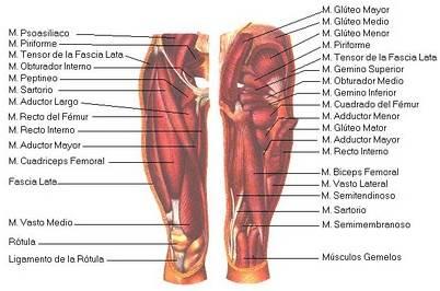 Semiolog a osteoarticular articulaci n de rodilla - Dolor en la parte interior de la rodilla ...