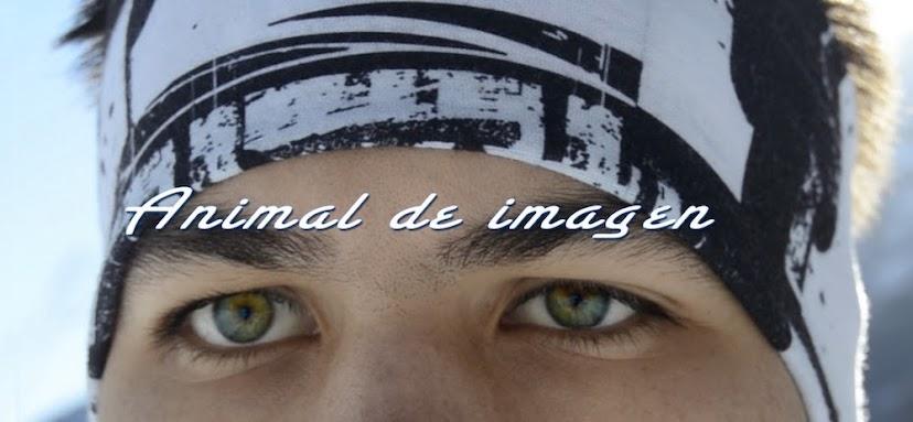 ANIMAL DE IMAGEN