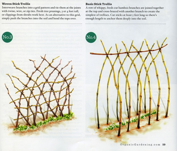 Sweet Pea Trellis Ideas Part - 37: Language Of Flowers :: Aprilu0027s Sweet Pea