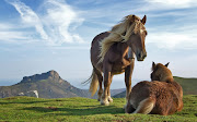 The sense of a horse of touch is highly developed.